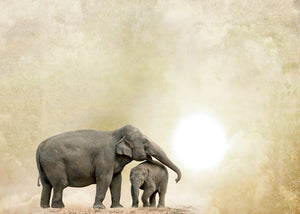Elephants on a grunge background Wall Mural Wallpaper - Canvas Art Rocks - 1