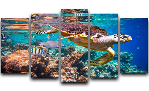 Eretmochelys imbricata 5 Split Panel Canvas  - Canvas Art Rocks - 1