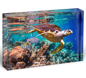 Eretmochelys imbricata Acrylic Block - Canvas Art Rocks - 1