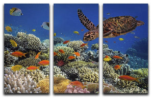 Eretmochelys imbricata floats under water 3 Split Panel Canvas Print - Canvas Art Rocks - 1