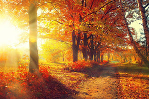 Fall Autumn Park Wall Mural Wallpaper - Canvas Art Rocks - 1