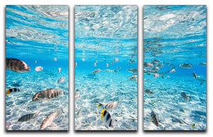 Fish and black tipped sharks 3 Split Panel Canvas Print - Canvas Art Rocks - 1