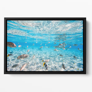 Fish and black tipped sharks Floating Framed Canvas