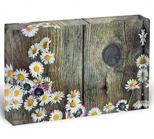Fresh daisies on wood Acrylic Block - Canvas Art Rocks - 1