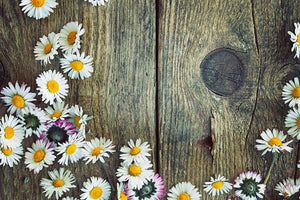 Fresh daisies on wood Wall Mural Wallpaper - Canvas Art Rocks - 1
