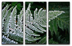 Frosty Fern 3 Split Panel Canvas Print - Canvas Art Rocks - 1