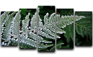Frosty Fern 5 Split Panel Canvas - Canvas Art Rocks - 1