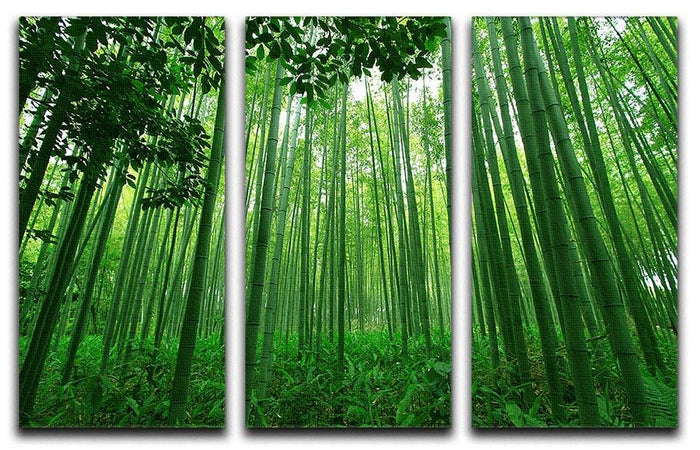 Green bamboo forest 3 Split Panel Canvas Print