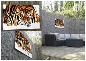 Indian Tiger Metal Print - Canvas Art Rocks - 2