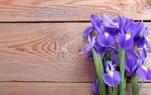 Iris on an old wooden background Wall Mural Wallpaper - Canvas Art Rocks - 1