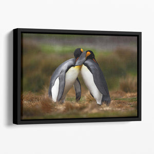King penguin couple cuddling Floating Framed Canvas - Canvas Art Rocks - 1