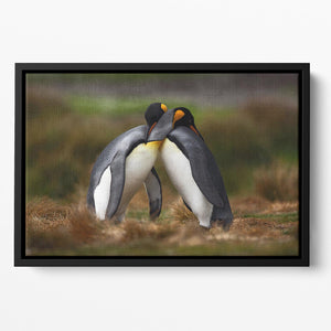 King penguin couple cuddling Floating Framed Canvas - Canvas Art Rocks - 2