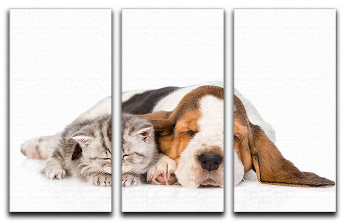 Kitten and puppy sleeping together. isolated on white background 3 Split Panel Canvas Print