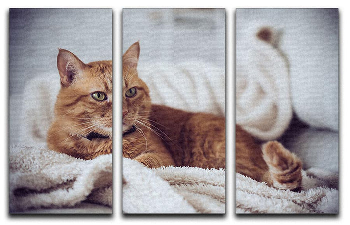 Large home fluffy ginger cat lying on the sofa 3 Split Panel Canvas Print