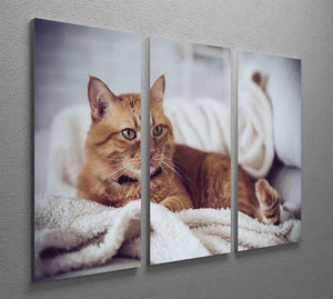 Large home fluffy ginger cat lying on the sofa 3 Split Panel Canvas Print - Canvas Art Rocks - 2