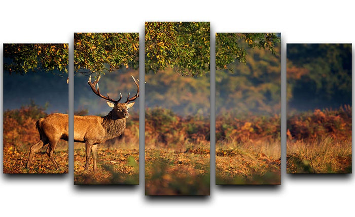 Large red deer stag in autumn 5 Split Panel Canvas