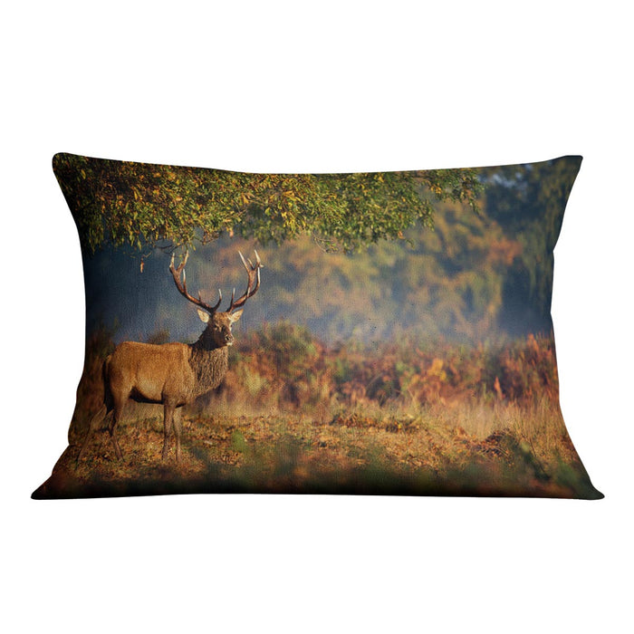Large red deer stag in autumn Cushion