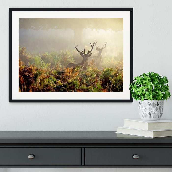 Large red deer stag in mist Framed Print