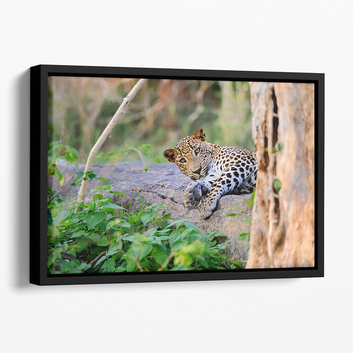 Leopard in the wild Floating Framed Canvas