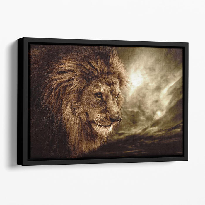 Lion against stormy sky Floating Framed Canvas