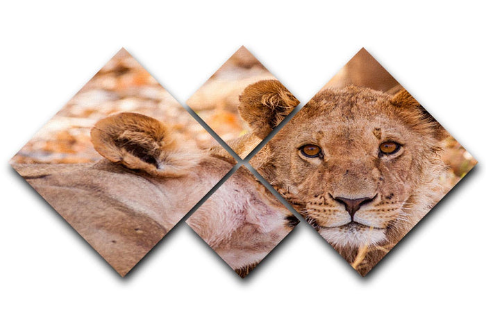 Lion cub and mother 4 Square Multi Panel Canvas