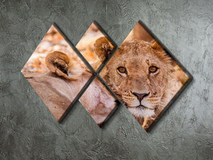 Lion cub and mother 4 Square Multi Panel Canvas - Canvas Art Rocks - 2