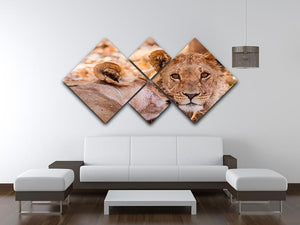 Lion cub and mother 4 Square Multi Panel Canvas - Canvas Art Rocks - 3