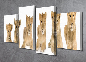 Lion cub growing 4 Split Panel Canvas - Canvas Art Rocks - 2