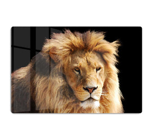 Lion head HD Metal Print - Canvas Art Rocks - 1