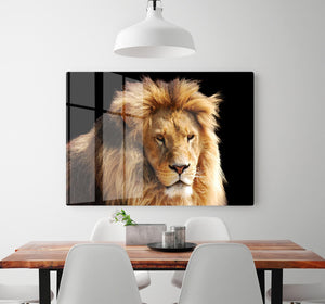 Lion head HD Metal Print - Canvas Art Rocks - 2