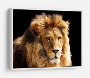 Lion head HD Metal Print - Canvas Art Rocks - 7