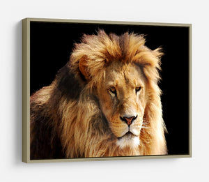 Lion head HD Metal Print - Canvas Art Rocks - 8