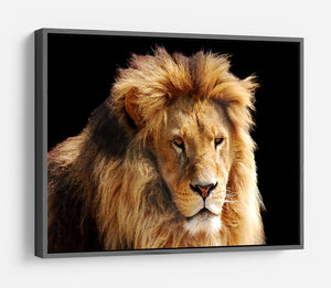 Lion head HD Metal Print - Canvas Art Rocks - 9