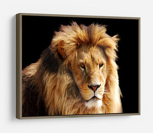 Lion head HD Metal Print - Canvas Art Rocks - 10