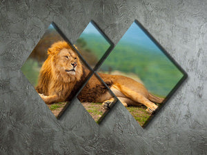 Lion male having a rest 4 Square Multi Panel Canvas - Canvas Art Rocks - 2