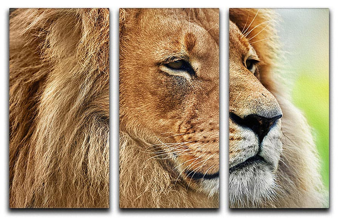 Lion portrait on savanna 3 Split Panel Canvas Print