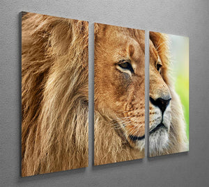 Lion portrait on savanna 3 Split Panel Canvas Print - Canvas Art Rocks - 2
