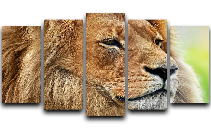 Lion portrait on savanna 5 Split Panel Canvas