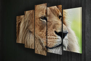 Lion portrait on savanna 5 Split Panel Canvas - Canvas Art Rocks - 2
