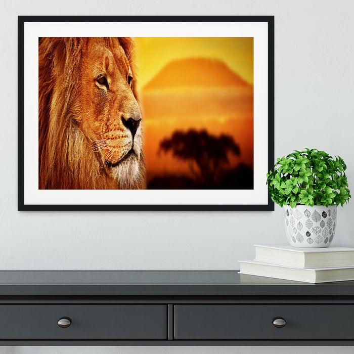 Lion portrait on savanna landscape Framed Print