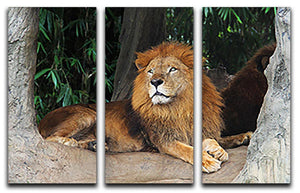 Lion resting on a tree 3 Split Panel Canvas Print - Canvas Art Rocks - 1
