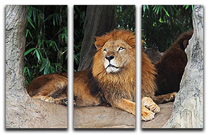 Lion resting on a tree 3 Split Panel Canvas Print