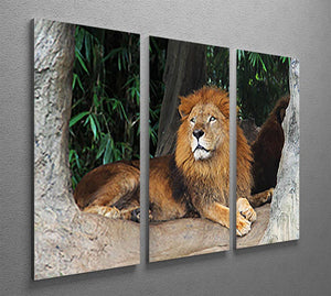 Lion resting on a tree 3 Split Panel Canvas Print - Canvas Art Rocks - 2