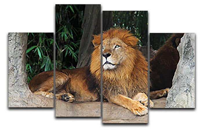 Lion resting on a tree 4 Split Panel Canvas