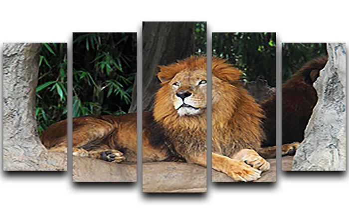Lion resting on a tree 5 Split Panel Canvas