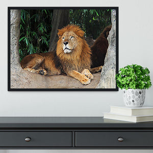 Lion resting on a tree Framed Print - Canvas Art Rocks - 2