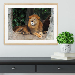 Lion resting on a tree Framed Print - Canvas Art Rocks - 3