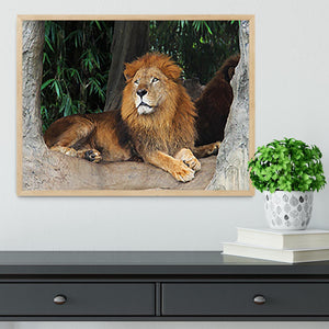 Lion resting on a tree Framed Print - Canvas Art Rocks - 4