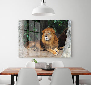 Lion resting on a tree HD Metal Print - Canvas Art Rocks - 2