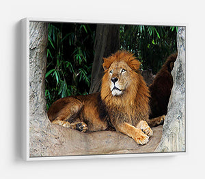 Lion resting on a tree HD Metal Print - Canvas Art Rocks - 7